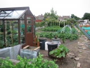 Middle of allotment July 2009