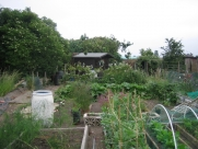 Bottom of Allotment July 2009