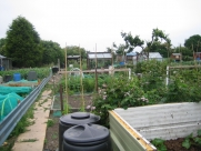 Top of Allotment July 2009