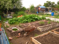 Bottom of Allotment May 2008