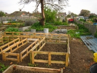 Middle of allotment May 2008