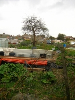Middle of allotment February 2008